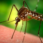West Nile Virus Advisory